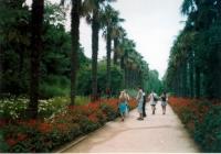 Aleea principala in gradina botanica Nikita